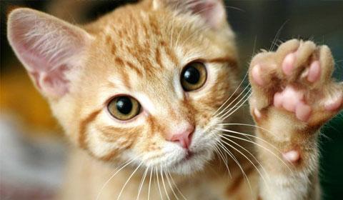 Los gatos ayudan a prevenir el asma en niños pequeños